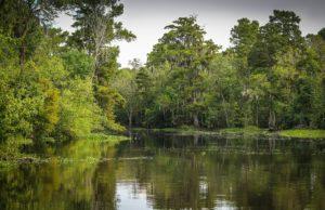 New Orleans BayouWetlandsHelicopter Tour